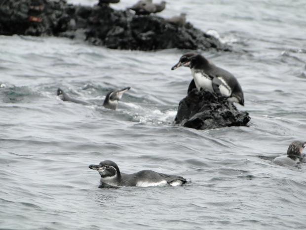 penguineonrock