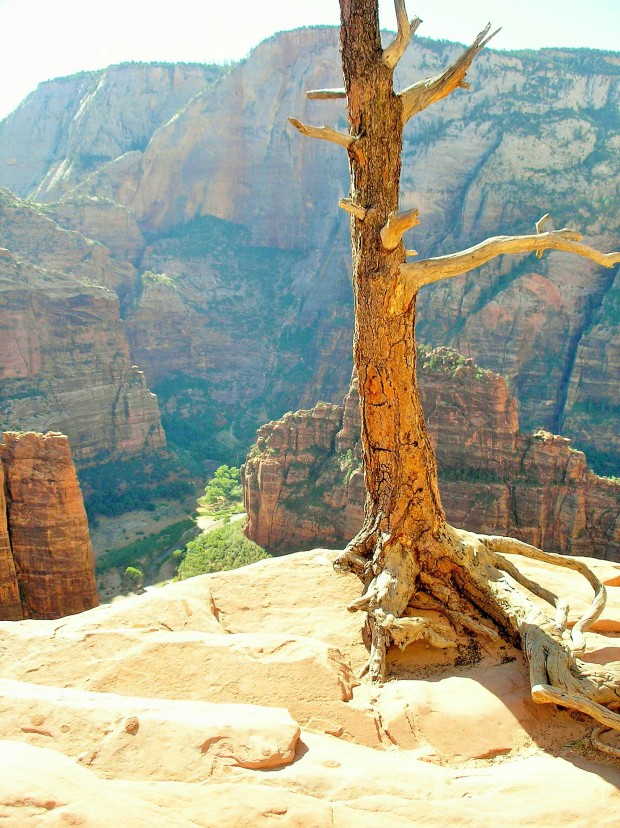 (near the top of Angels Landing Trail)