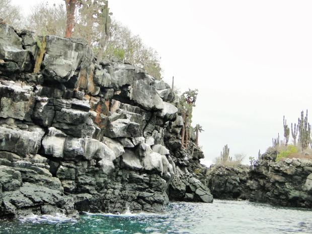 cliffscactus (2)