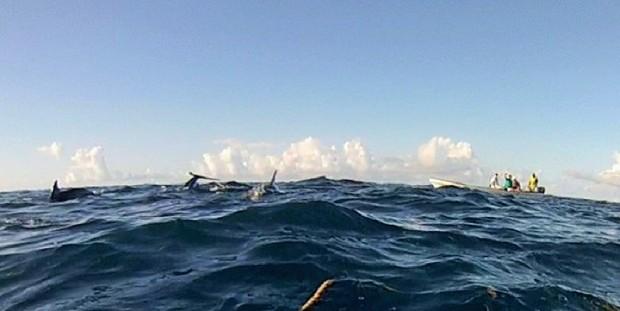 dolphinbreach (3)
