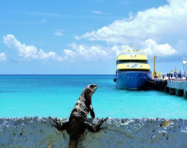 Iguana&boat